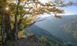 Orte Schwarzwald
