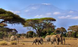Afrika Reise Kenia