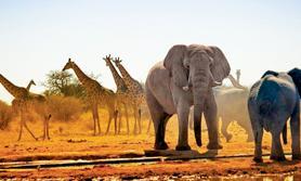 Afrika Winter