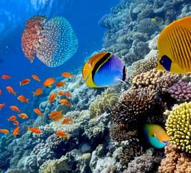 Hurghada FTI