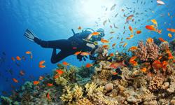Malediven Last Minute Tauchen