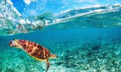 Schildkröte La Vanille