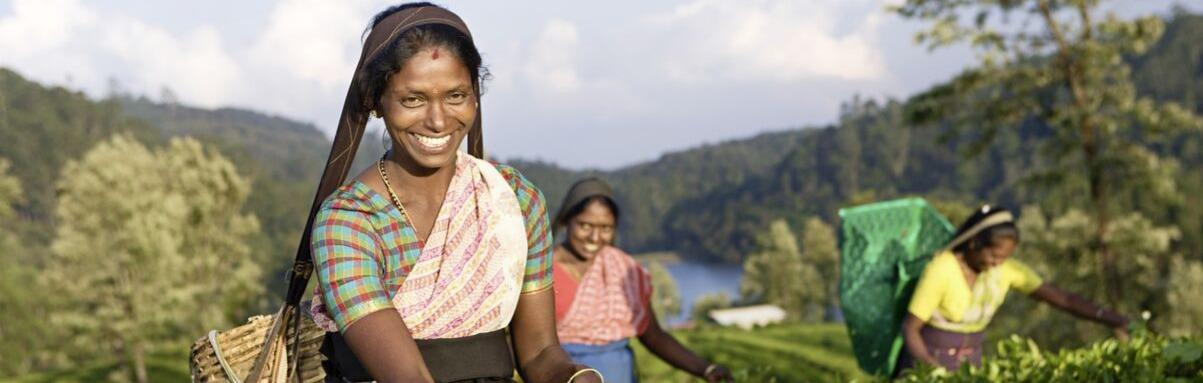 Meer vakanties naar Sri Lanka
