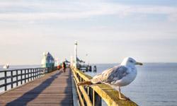 Ostsee Urlaub Möwe