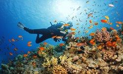 Plongée Egypte - la Mer Rouge